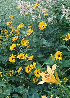 Flowers for beginners - plants that grow themselves! Or just a great list of perennials for those of us that love Peonies, Geraniums, Daylilies, Dianthus, and Black-Eyed Susans. :D