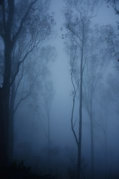 Creative Landscape, Cargo, Fog, Forest, and Photography image ideas & inspiration on Designspiration Tree Forest, Dark Forest, Foggy Forest, Beautiful World, Beautiful Places, Mystique, Foto Art, Land Scape, Mists
