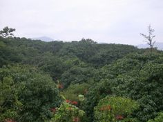 Lamanai es un sitio arqueológico de la cultura maya precolombina, que se localiza en el Distrito de Orange Walk