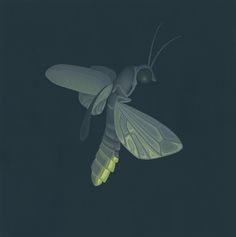 16 best Fireflies images on Pinterest   Fireflies  Glow worms and     Firefly Art  Great Gray Art  Nathan Marcy  wildlife  nature  painting