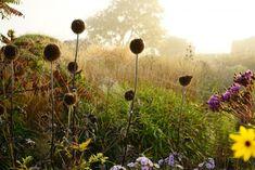 10 Garden Ideas to Steal from Superstar Dutch Designer #Piet #Oudolf: Make a Four Season Garden.