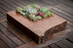 My two favorites... succulents and a gorgeous slab of wood!