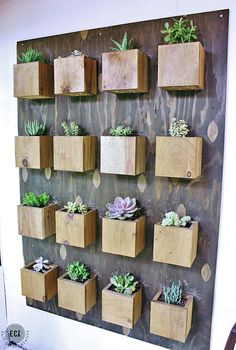 Indoor Cool Cactus & Succulent Projects 47