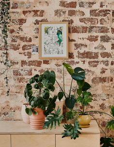 Guy Vadas from Céramiques in Elsternwick got real smart real quick about how to bring his beloved pottery workshops to the home. Inspired Homes, Planters Nuts, Apartment Plants, Cool Rooms, Ceramic Studio, Interior Art, Plant Life, Australian Architecture, Ceramicist
