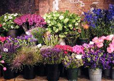 Guinness World, Fine Art, Creative, Flowers, Plants, Inspiration, Atelier, Biblical Inspiration, Florals
