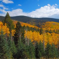 Miles of side trails were illegally logged in New Mexico's Santa Fe National Forest to make room for backcountry skiing.