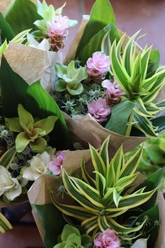 Succulents, Flowers, Plants, Succulent Plants, Plant, Royal Icing Flowers, Flower, Florals, Floral