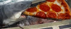 Ultimate Pizza Lovers Gallery 2.0! (60 hilarious Pizza Gifs!)
