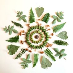 Ferns and Mushrooms by Flora Forager                                                                                                                                                                                 More
