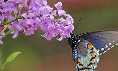 Plants That Attract Wildlife