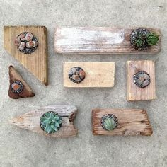 Abstract reclaimed wood planters Cacti And Succulents, Planting Succulents, Planting Flowers, Succulent Planters, Cacti Garden, Cactus Plants, Driftwood Planters, Wooden Planters, Driftwood Ideas