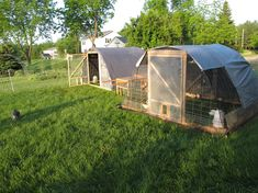 cheap easy goat fencing options - Google Search