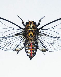 Philippa Bentley's Tuned In Cicada art print, for the radio junkie in your life. Or me :-)