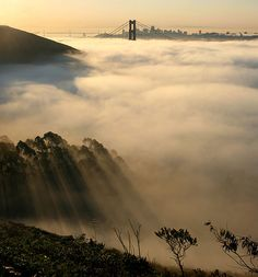: Out of fog Bay Bridge and Golden Gate Bridge and San Francisco in fog and Crepuscular rays. San Francisco California, California Dreamin', San Francisco Skyline, Northern California, Hollywood Hills, What Is Fog, Places To Travel, Places To See, Travel Pics