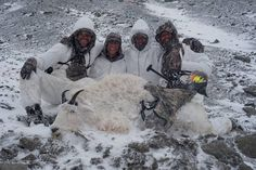Sitka Athlete Adam Foss just arrowed his first mountain goat with the help of fellow Athletes Cole Kramer and Mark Seacat and videographer Sean Tippin - Sitka Gear