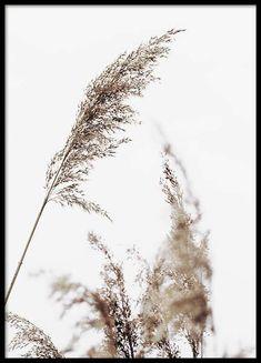 Grass Poster no grupo Posters  / Tamanhos / 50x70cm em Desenio AB (10180)