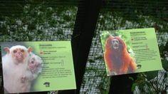 bordjes voor de namen en de informatie van de mensen die in de kooi zitten
