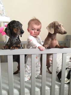 """19 Photos Of Kids And Pets That Will Even Make Assholes Say, """"Aww"""""""