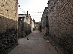 File:Dog in an alley (6240647978).jpg - Wikimedia Commons
