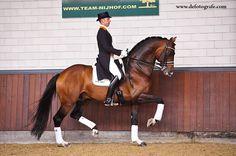 KWPN Stallion Johnson