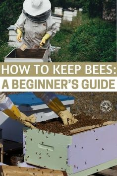 How To Keep Bees: A Beginner's Guide — Beekeeping can be a fun and rewarding past time. It also has a few benefits, honey, wax and the knowledge that you are helping the bee population survive. It is great in so many of the foods and beverages we consume on a daily basis. #beekeeping #beekeepingguide #homestead #homesteading