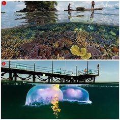 What lies below sea level in the world's oceans? http://veu.sk/index.php/aktuality/546-co-sa-skryva-pod-morskou-hladinou-v-svetovych-oceanoch.html #what #lies #below #sea #level #world #oceans #animals