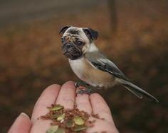ON SALE - Surreal Animal Photo - Large Format Print - Weird Animal - Pug Art - Bird Dog - April Fool Portrait - Funny Wall Art 20x30 Print
