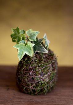 Free scullent... #succulent #green #art #kokedama #design #handmade #gardening #flower