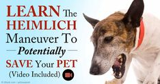 Find out the signs and causes of choking, and how to perform the Heimlich Maneuver on your pet. http://healthypets.mercola.com/sites/healthypets/archive/2015/11/14/pet-choking-emergency.aspx