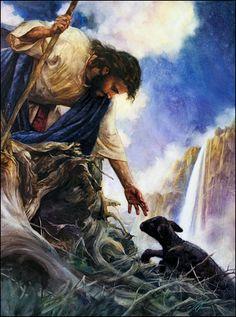 black sheep saved