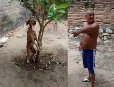 Justice for dog hanged in Mossoro, Brazil! My God that was brutal. The man should be in prison for a long time. Justice for that poor dog! Cane Corso, Sphynx, Chinchilla, Peta, Wild Life, Otter, Rottweiler, Pitbull, Husky