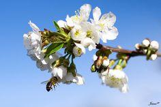 Spring  by Jaime Gp,
