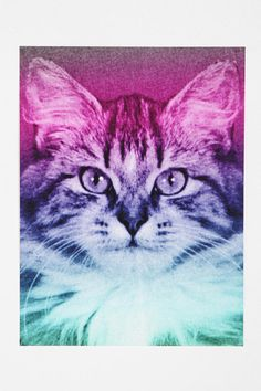 Rainbow Cat Poster. Strongly considering this.