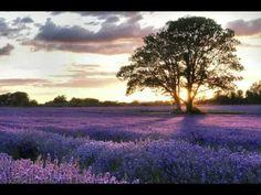 Ladies in Lavender - main theme ( Joshua Bell )