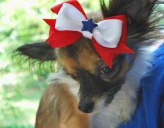 I would never do this to my dog, but I love the Patriotic bow idea for a little girl!