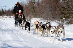Dog sledding in northern Manitoba