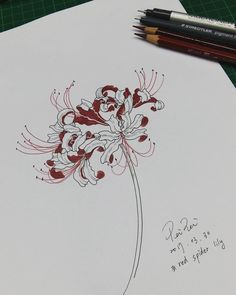 No photo description available. Tattoo Samurai, Art Sketches, Art Drawings, Red Spider Lily, Lilies Drawing, Manga Drawing Tutorials, Art Diary, Botanical Art, Flower Tattoos