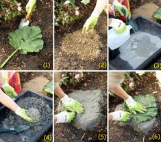 Cast in Stone: DIY Landscape Accent - Creative Ideas & Designs Concrete Leaves, Concrete Stone, Concrete Casting, Cool Art Projects, Garden Projects, Diy Projects, Garden Tips, Leaf Stepping Stones, Stone Planters