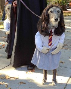 funny dog costume