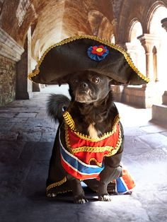 #Dogs as #Napolean. I can't stop looking at this.