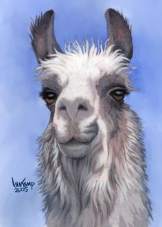 Llama with Blanket Clip Art - Bing images Alpacas, Cute Animal Videos, Cute Animal Pictures, Watercolor Animals, Watercolor Art, Alpaca Drawing, Llama Arts, Llama Llama, Farm Animals