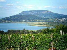 Wine Country, Hungary, Budapest, Beautiful Places, Marvel, River, Mountains, Nature, Pictures