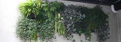 Woolly Pockets | Lush Green Walls | Wall Planters - Vertical Gardens