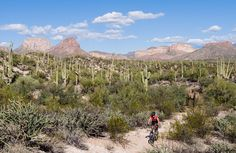 100 Miles in the Sonoran Desert: Oracle to Picketpost on the Arizona Trail.