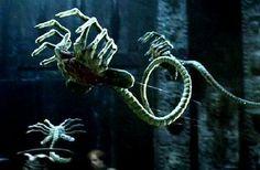 xenomorph | Image - Xenomorph-FaceHugger.jpg - Xenopedia - Aliens vs. Predator ...