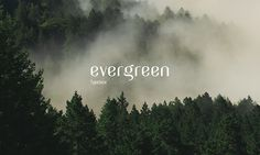Evergreen typeface on Behance