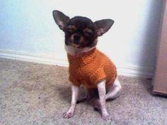 5 lb Single Cable Dog Sweater knit patterns « autumnblossomknits