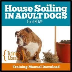 Is your adult dog peeing or pooping in your house? You might be surprised at… Dog Pooping In House, Dog House Plans, Dog Urine, Pet Kennels, Dog Potty, Dog Pee, Dog Behavior, Training Your Dog, Exotic Pets