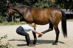 Mit den richtigen Übungen, reichen bereits wenige Minuten täglich, um die Rückengesundheit hres Pferde nachhaltig zu verbessern. © JB Tierfoto / Cadmos