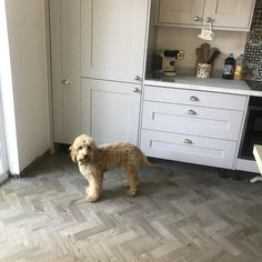 New kitchen floor of dreams 🏡💕oh and Wilf 🐶💙 Country Kitchen, New Kitchen, Kitchen Ideas, Amtico Flooring Kitchen, Wood Flooring, Kitchen Interior, Kitchen Design, Open Plan Kitchen Living Room, Real Wood Floors